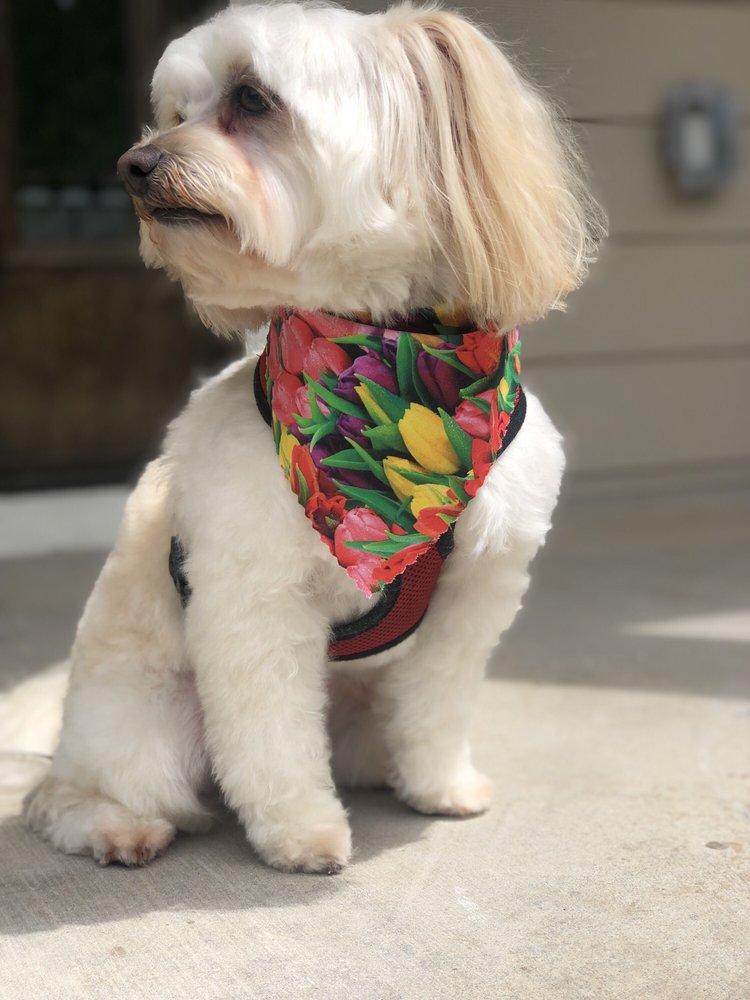 Anne's Pretty Pups: 750 S Main St, Keller, TX