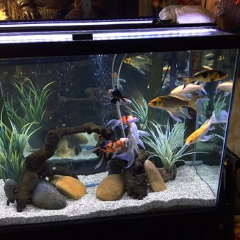 Oceans Aquarium 86 Photos 62 Reviews Aquarium