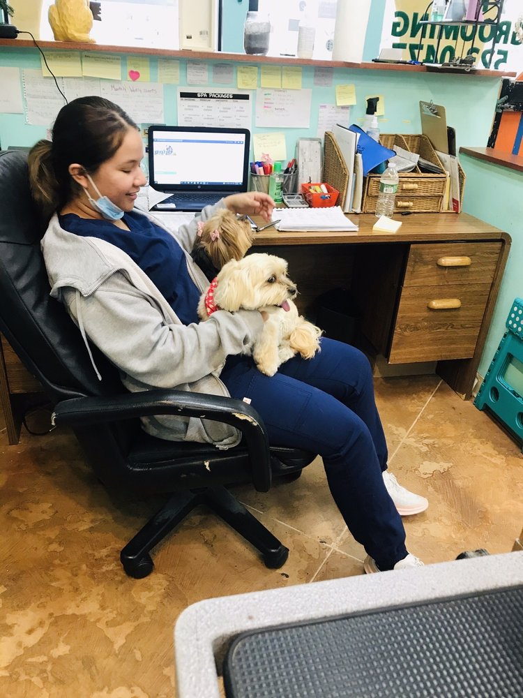 Animal Arts Pet Grooming