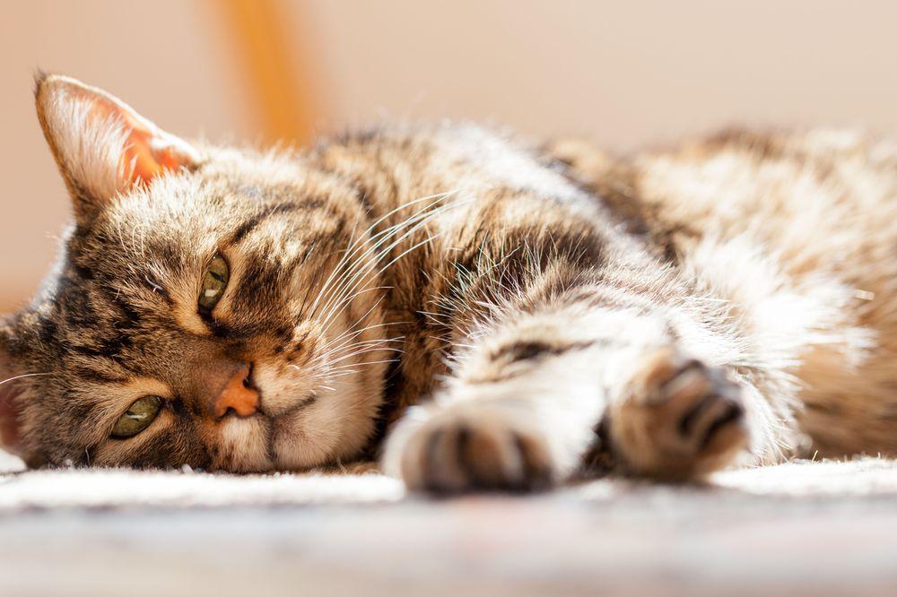Peaceful Passing - At Home Pet Euthanasia: Fresno, CA