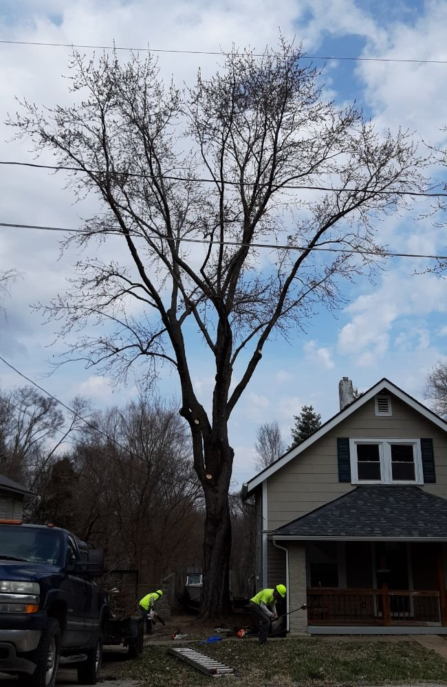 Moore's Affordable Tree Trimming & Removal
