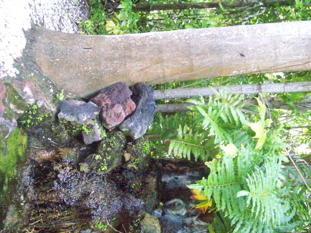 Photos For Sarasota Jungle Gardens Yelp