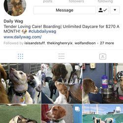 Daily Wag 16 Photos Amp 21 Reviews Pet Boarding 1190