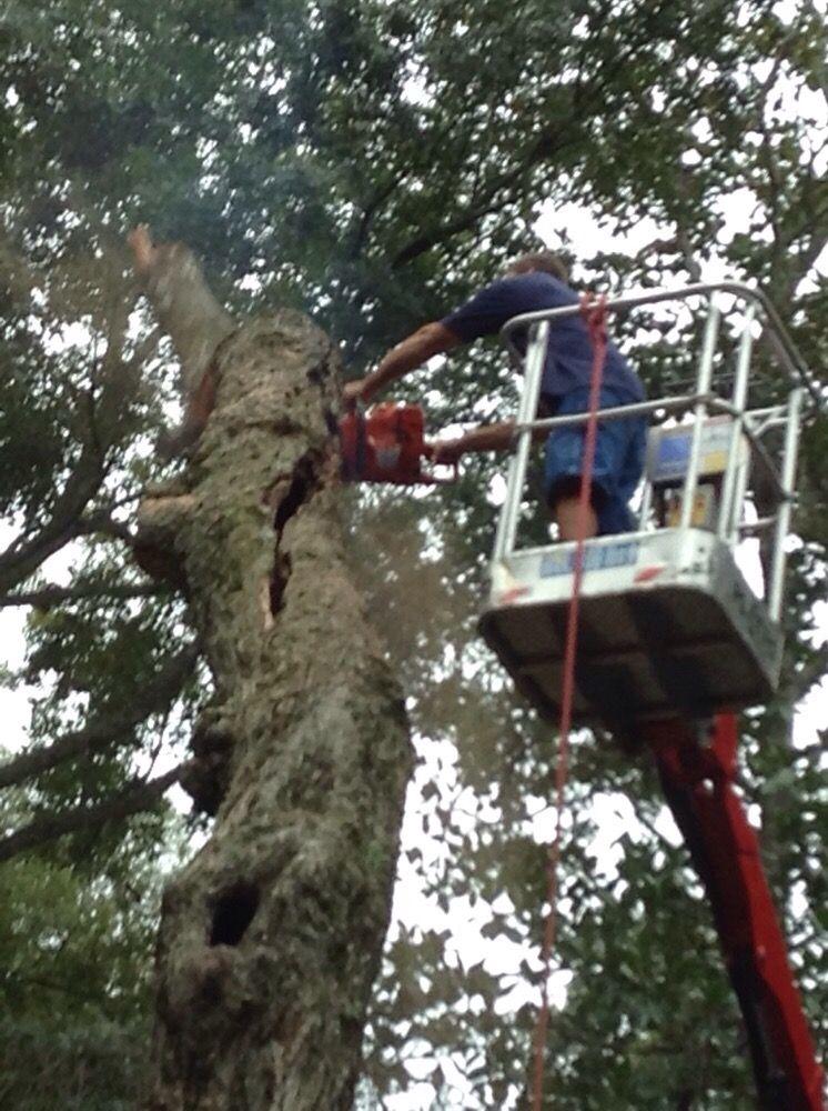 A Cut Above Tree Service: 70 Levy Rd, Atlantic Beach, FL