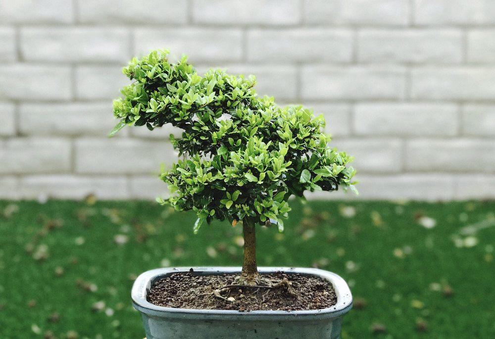 Fuji Bonsai Nursery 47 Photos 31 Reviews Nurseries Gardening 13170 Glenoaks Blvd Sylmar Ca Phone Number Yelp