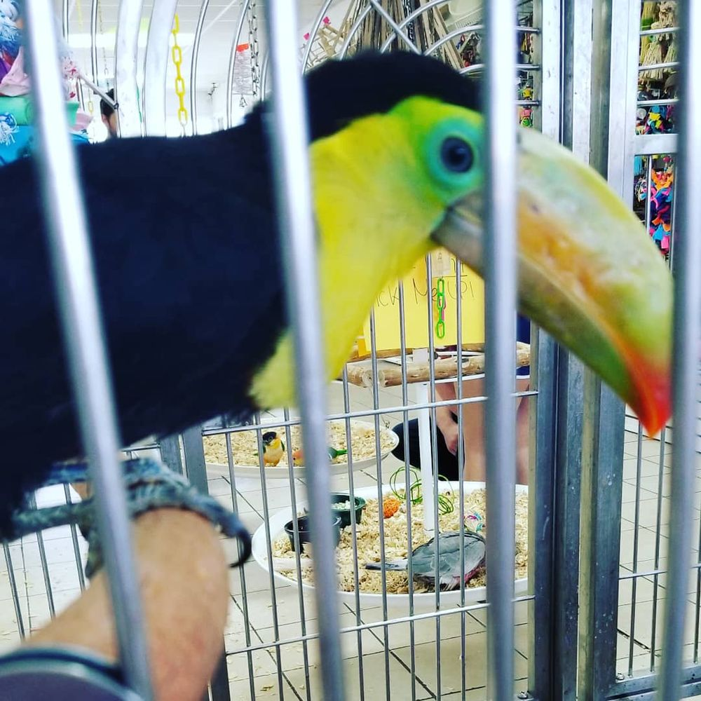 Omar's Exotic Birds