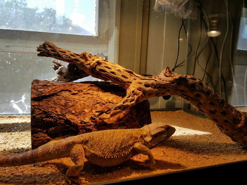 Predator's Reptile Center: 1816 W Baseline Rd, Mesa, AZ
