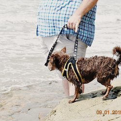 Del Mar Dog Beach - 581 Photos & 336 Reviews - Beaches