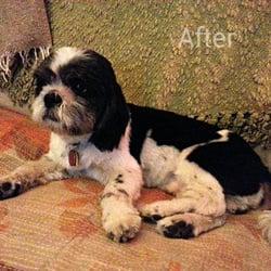 Pet groomers in new york yelp squeaky clean dog grooming solutioingenieria Gallery