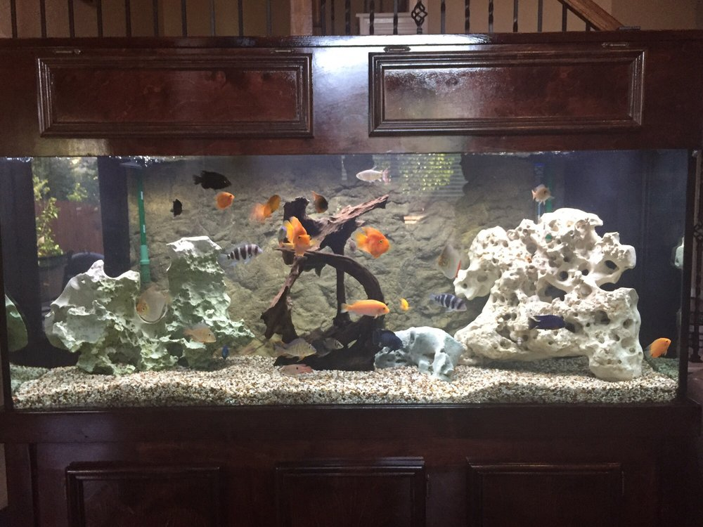 Ultimate fish aquarium services 4720 fm 2920 rd for Fish tank cleaning service near me