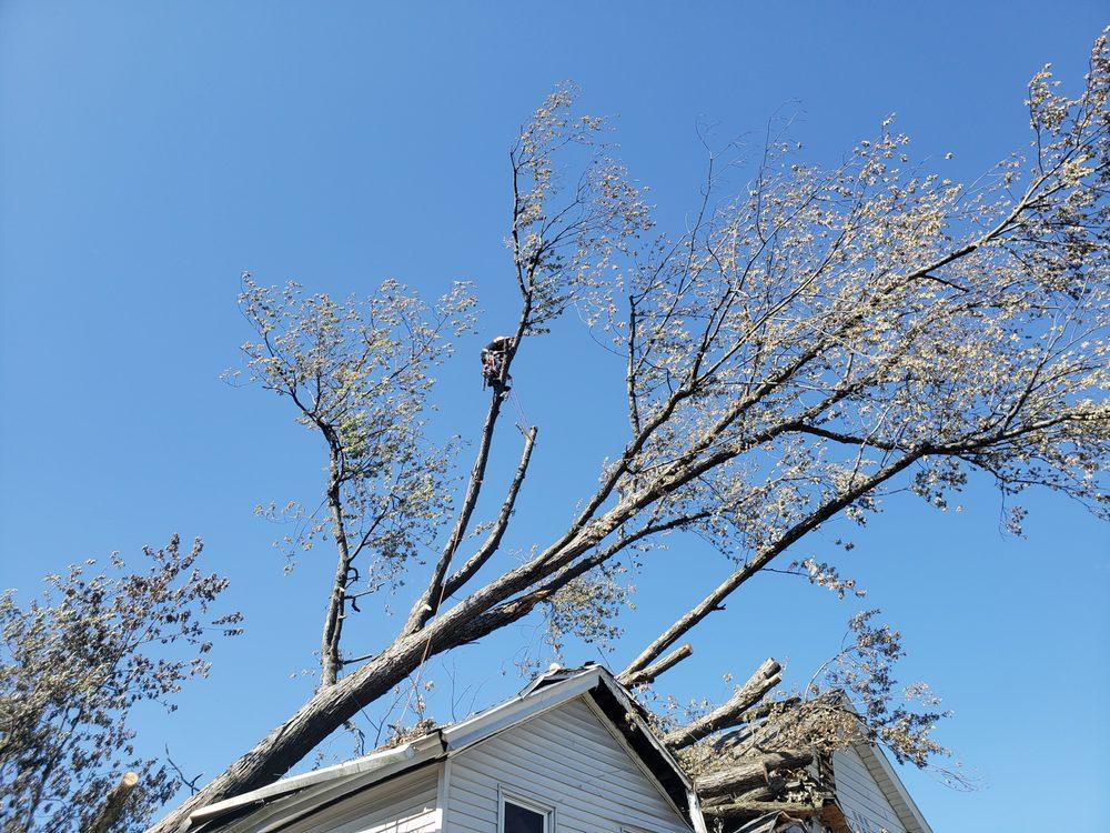 To The Max Tree Service: Scranton, PA