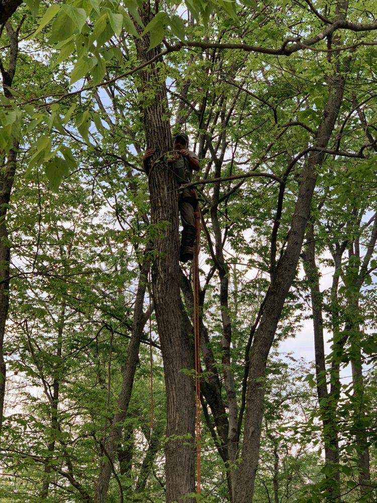 Schaeffers Tree Service: Felton, PA