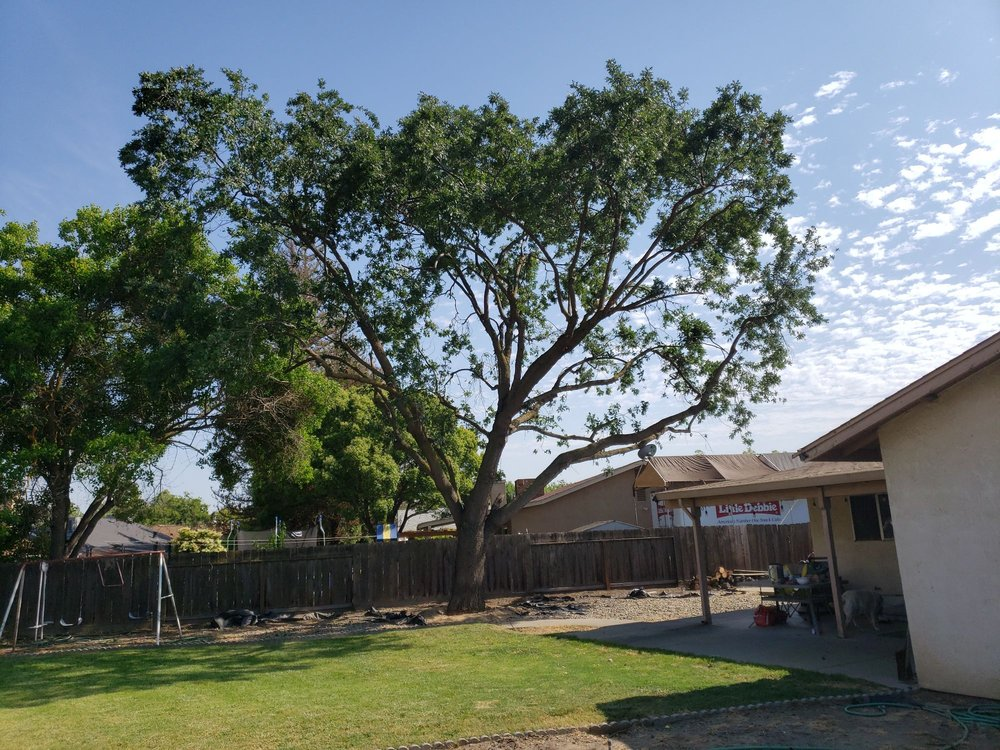 Discovery Tree Care: 3012 Park Royal Dr, Ceres, CA