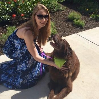 Allison t 39 s reviews san antonio yelp for Cool dog spa san antonio