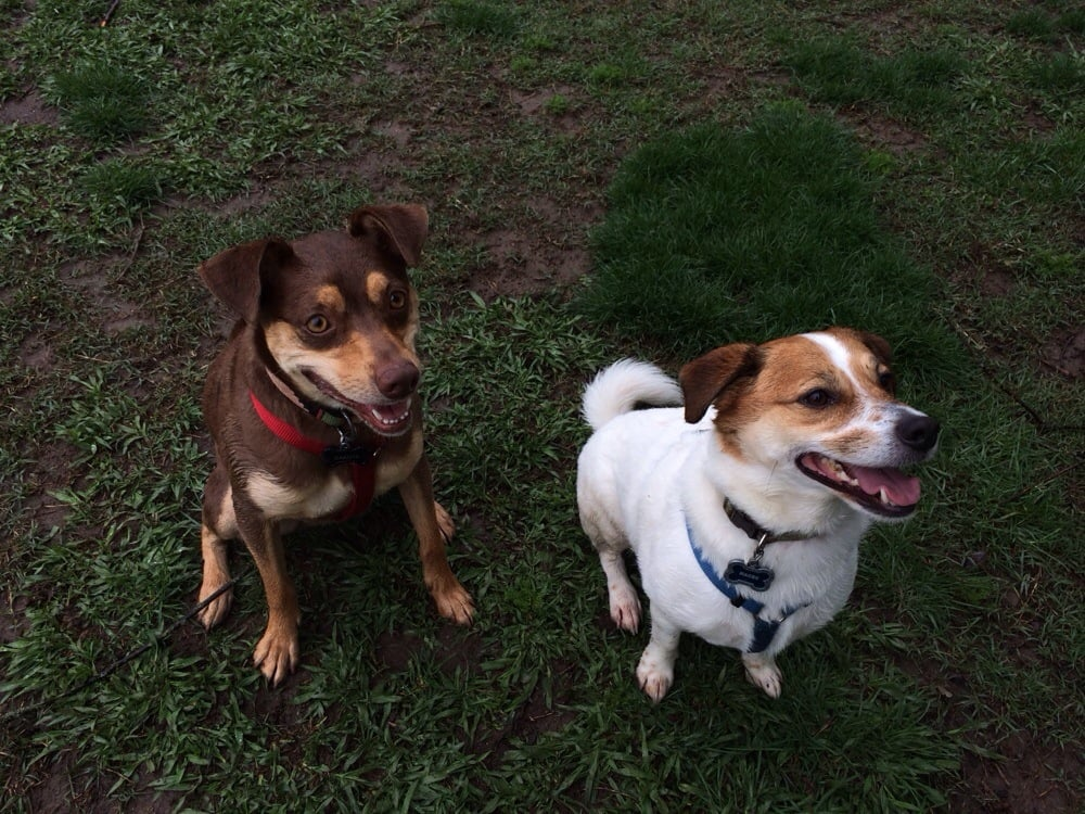 Roseville Dog Park