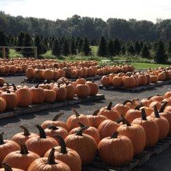 7213560fe65 Top 10 Best Pumpkin Patches near Liverpool