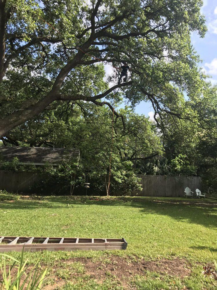 Mudge Tree Service: Gretna, LA