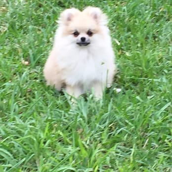 Pooches day spa pet groomers 9091 fair oaks pkwy fair for Cool dog spa san antonio
