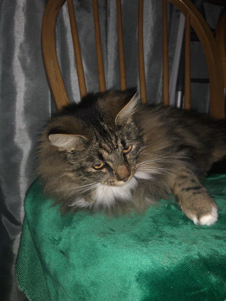 Bit O'Blarney Pet Services: 9835 Rolling Meadows Ln, Salinas, CA