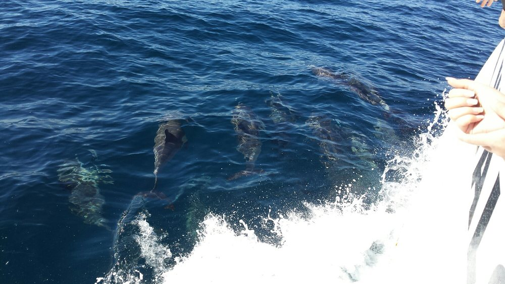 Dolphins yelp for Marina del rey fishing report