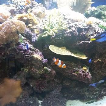 Aquarium world 70 photos 28 reviews pet shops for Fish store houston