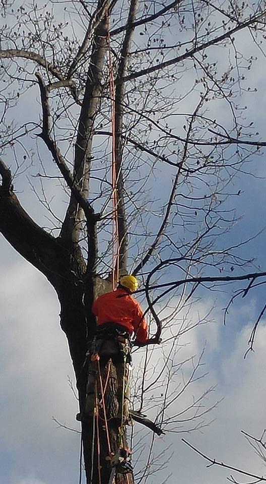 Andersen Tree Experts: 27050 Mechanicsville Rd, Mechanicsville, MD
