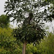 Berylwood Tree Farm - 20 Photos - Nurseries & Gardening