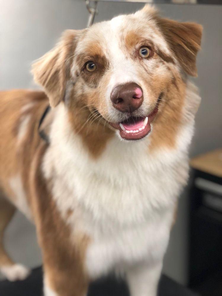Oh My Dog! Grooming: 39112 Winchester Rd, Murrieta, CA