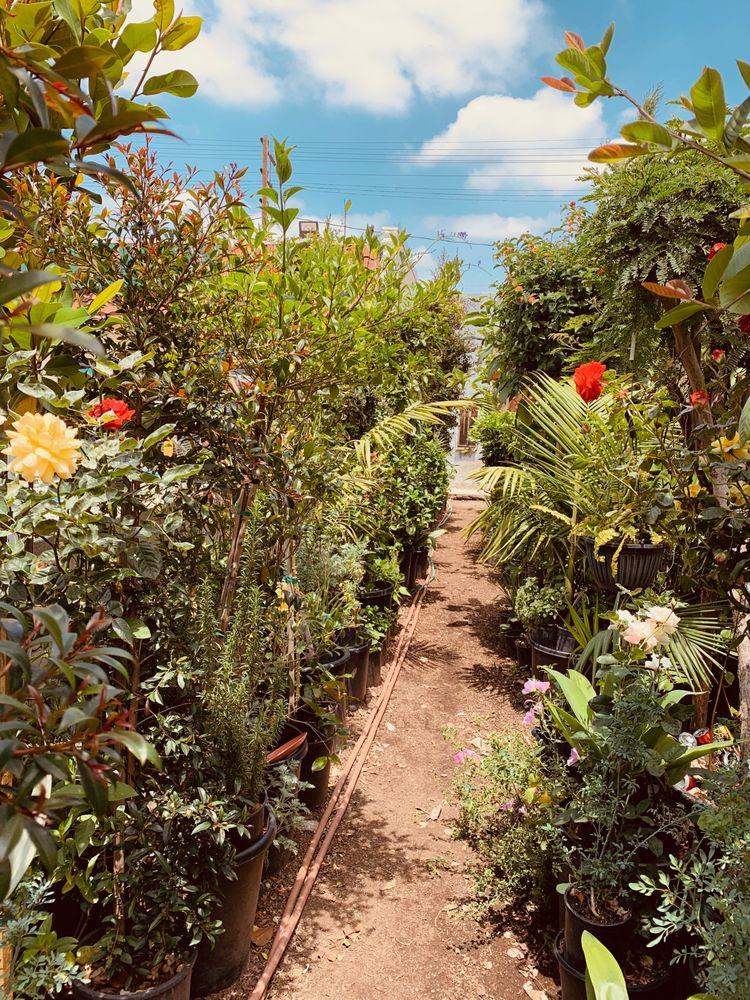 El Charro Plant Nursery: 6039 Whittier Blvd, East Los Angeles, CA