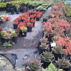 Photo Of Pacific View Nursery Malibu Ca United States