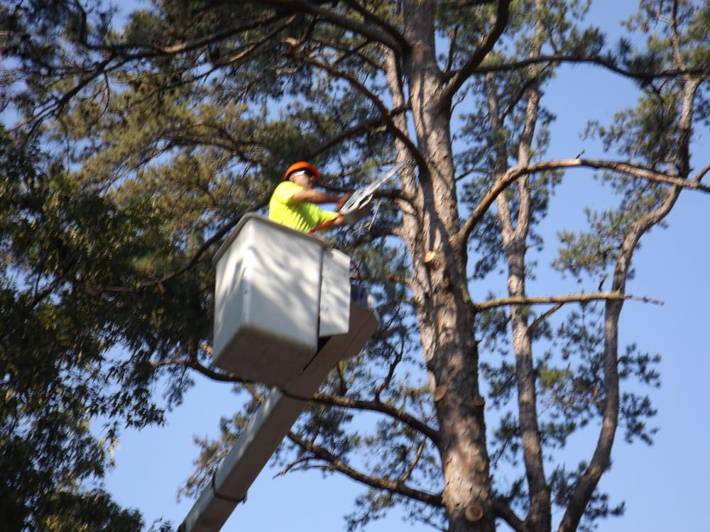 Bruder Tree & Landscape Services: Fayetteville, NC