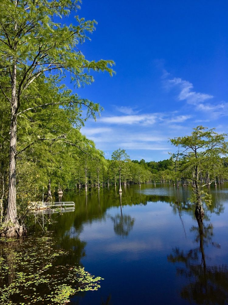 George L Smith State Park: 371 George L Smith State Park Rd, Twin City, GA