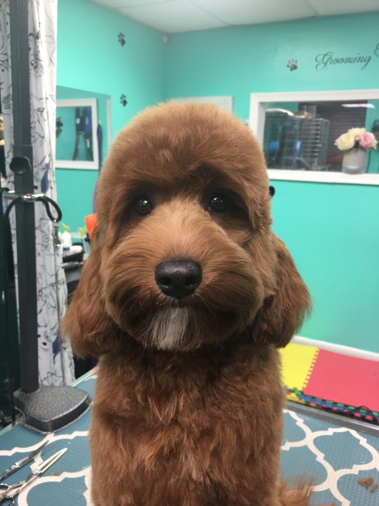 Coco Clips Dog Grooming