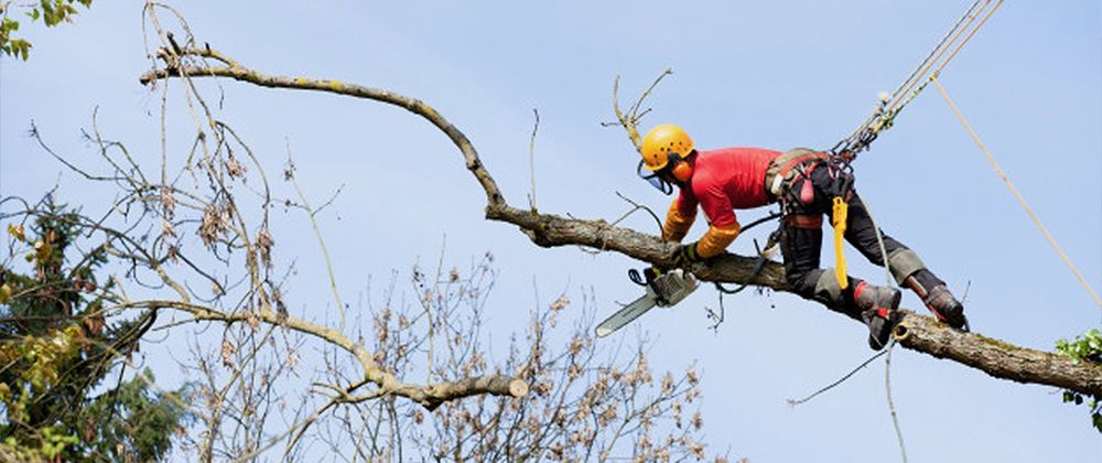 Lucas Tree Service: 60054 Christian Hill Rd, Cambridge, OH