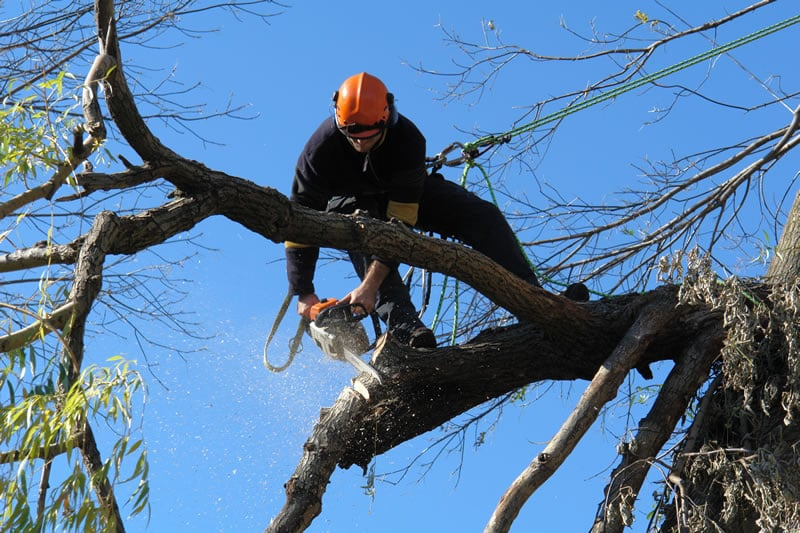 Royal Oak Tree Service: 430 N Kenwood Ave, Royal Oak, MI