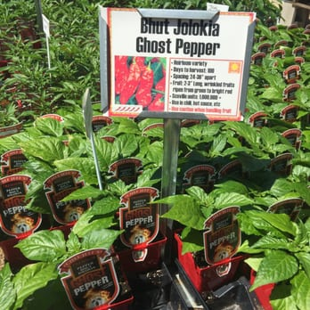 Photo Of Red Barn Garden Center Austin Tx United States Mama Likes
