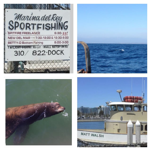 Whale watching expedition the 3 hour tour yelp for Marina del rey fishing report