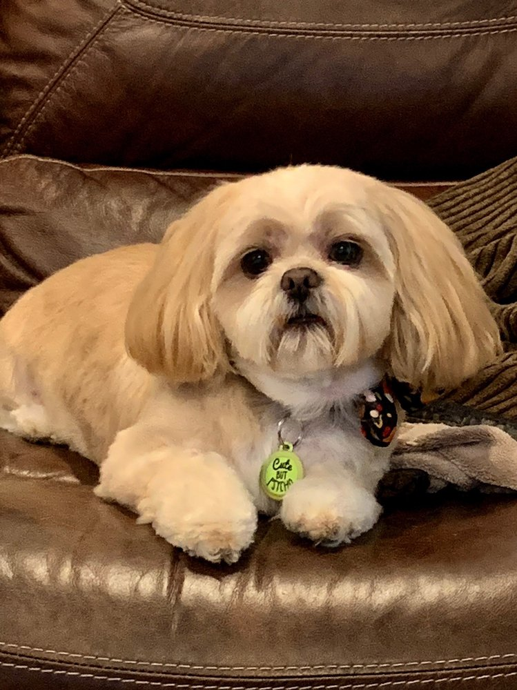 Happy Tails Mobile Dog Grooming Spa: Rowlett, TX