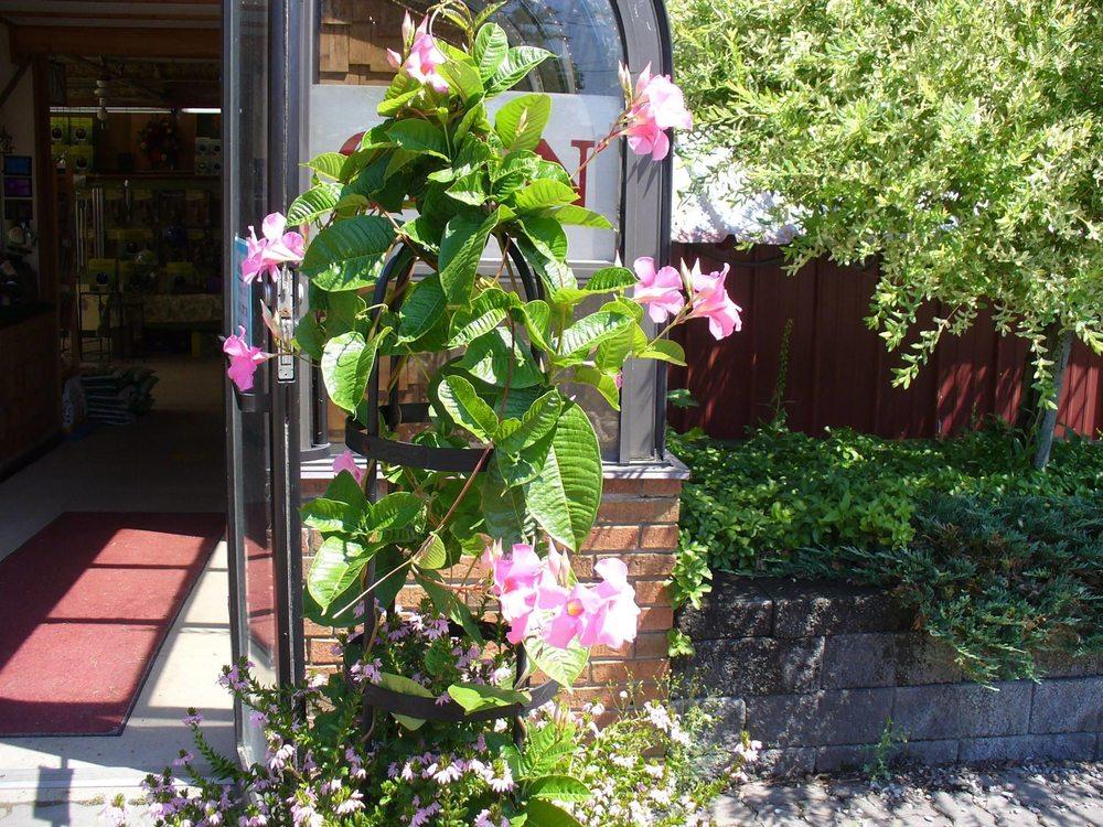 Bella Terra Greenhouse: 8607 N Main St, Angola, NY