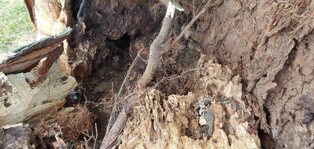 AAA Tree Service: Hennepin, IL