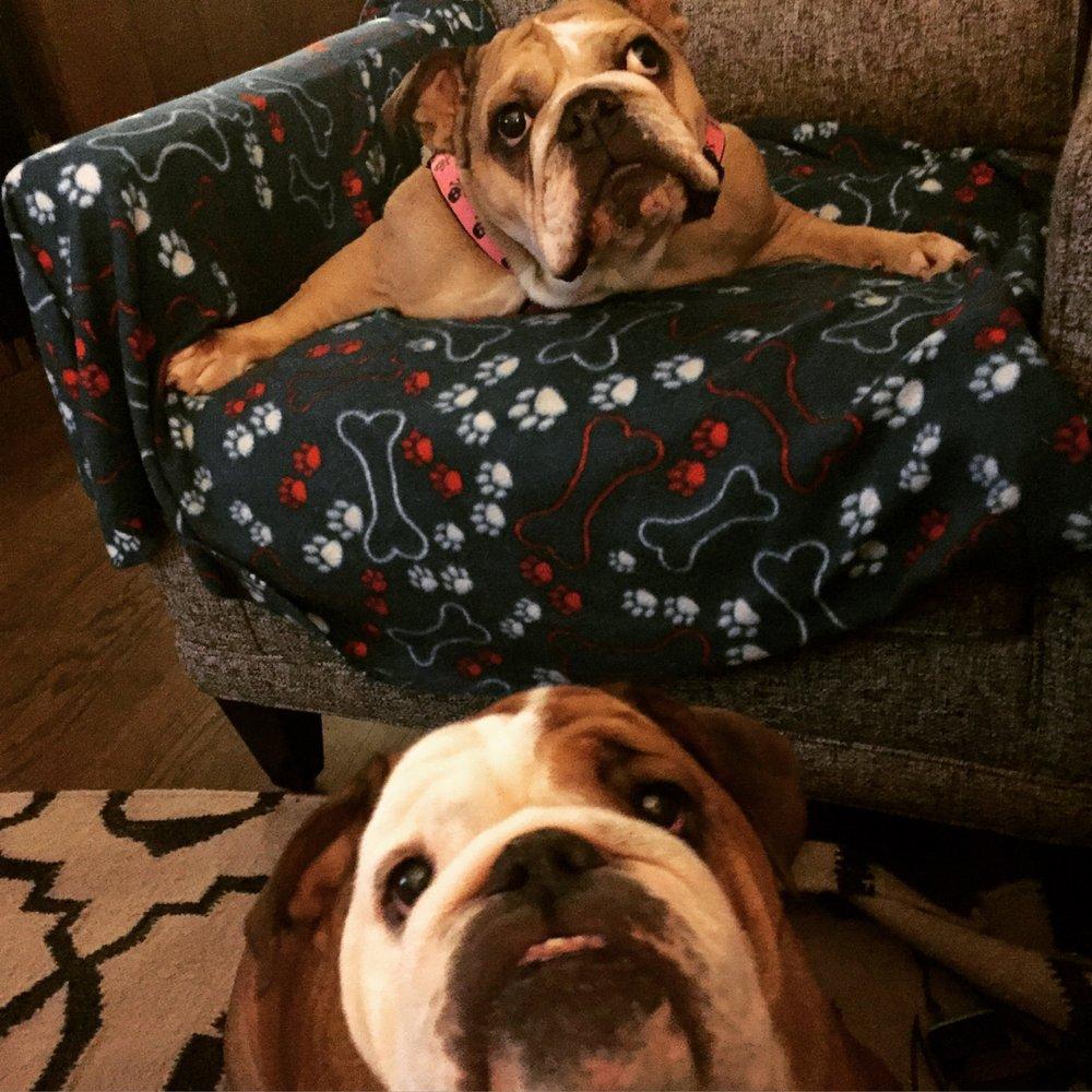 Chicago English Bulldog Rescue - 16 Photos & 21 Reviews