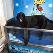 Furever clean dog wash 18 photos pet groomers 602b esquimalt a heated condition photo of furever clean dog wash victoria bc canada solutioingenieria Image collections