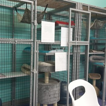 Wilton Manors Cat Cafe