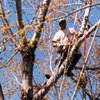 Arch City Tree Services: Arnold, MO