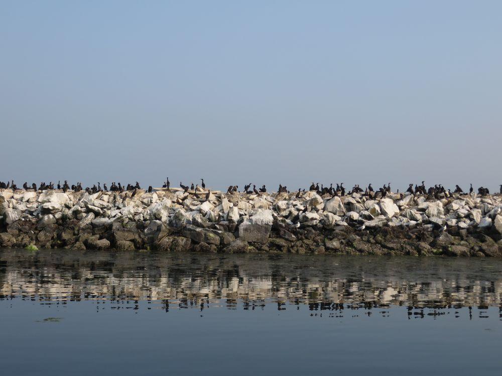 Historic Plover Ferry: Blaine, WA