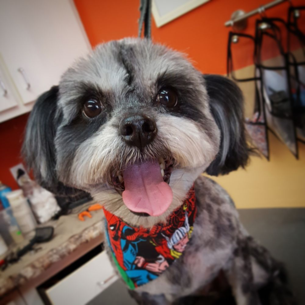Pet Planet Grooming: 131 Flower Valley Shopping Ctr, Florissant, MO