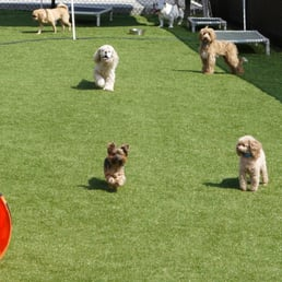 Luxe pet resort 18 photos 13 reviews pet boarding for Dog boarding places near me