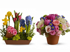 Dan's Flowers: 1419 W Chester Pike, West Chester, PA