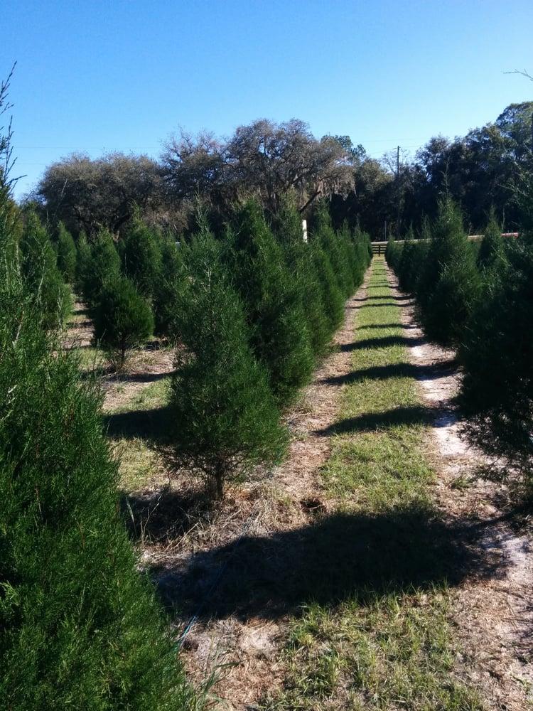 Christmas tree farm - Yelp