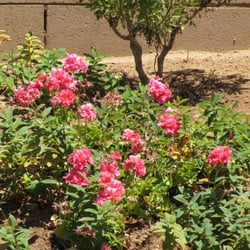 Edgar Lawn Amp Landscaping Jardinier Moreno Valley Ca